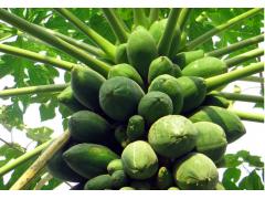木瓜图片一