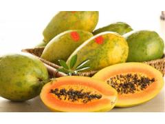 木瓜图片二