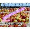 哪里的油桃价格便宜 哪里油桃价格低 哪里的油桃好多
