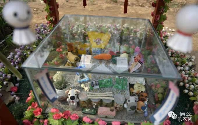 宠物公墓迎扫墓高峰 实拍北京宠物公墓扫墓现场