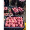 枣阳桃子大量上市,枣阳桃子批发