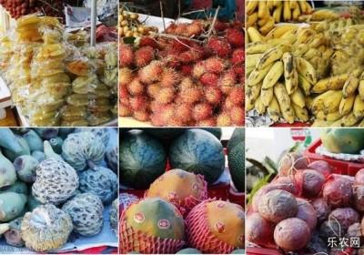 三亚哪里买热带水果