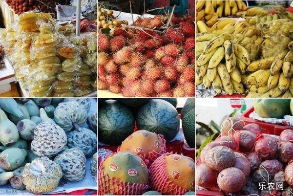 三亚哪里买热带水果 乐农