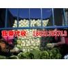 河北蔬菜上市啦 大量供应生菜、白萝卜、白菜