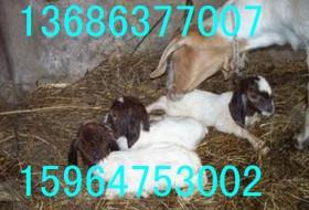 山东梁山畜牧局牛羊驴养殖场