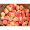 山东早熟苹果价格早熟嘎啦苹果价格