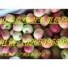 嘎啦苹果大量上市2015年山东嘎啦苹果价格
