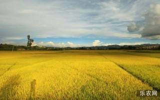 四部委发文提速农业现代化,驱动农庄建设有新招