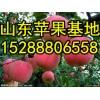 批发红富士苹果基地 红富士苹果价格快讯