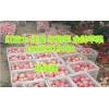 山东红富士苹果价格,今日红富士苹果最新价格