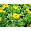 草花哪家有,台湾草花