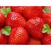 湖北省武汉市东西湖区新沟镇鸡头湾草莓种植基地供应新鲜草莓