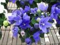 象征爱情的花 象征爱情的花有哪些