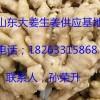18263315868供应山东生姜产地价格今日生姜价格