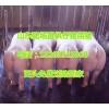 三元仔猪供应18263315868