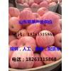 山东苹果产地18263315868供应红富士苹果最新价格