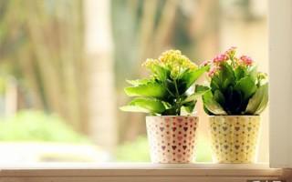 夏季盆栽花卉管理技巧