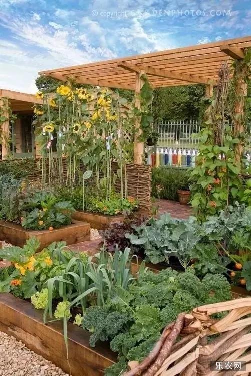 """这菜园可匹敌""""花园"""",这""""种菜技术""""叫艺术!"""