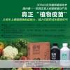 最新超敏蛋白农药,有效预防蔓枯病、炭腐病、锈病