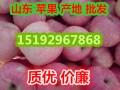 山东苹果 (2图)