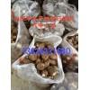 山东芋头基地山东新鲜芋头上市价格