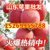 山东万亩精品红富士苹果价格
