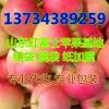 【山东苹果价格】山东苹果批发红富士苹果价格