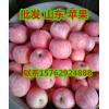 山东红富士苹果产地直批价格