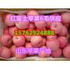 山东红富士苹果批发价格超低