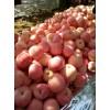 红富士苹果产地供应15762366966