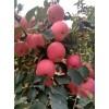 15762366966纸袋膜袋纸夹膜红富士苹果产地批发价格