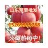 15269955788山东红富士苹果价格