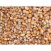 大量求购玉米 高粱 棉粕次粉 麸皮等饲料原料
