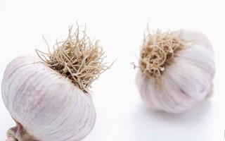 蒜的种植方法和营养价值