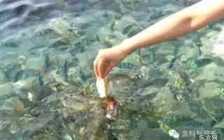 养殖户必看,五招教你判断鱼的饥饱