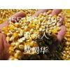 供应玉米粒