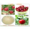 针叶樱桃提取物VC17%优质针叶樱桃粉加工提取SC认证厂家