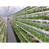 标准化无土栽培,水培设备