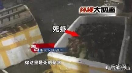严厉打击!湖南长沙市水产农贸市场内捡死虾卖_国内新闻_资讯_乐农网