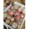 山东苹果基地嘎啦美八苹果产地大量上市价格