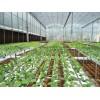 提供标准化无土栽培技术培训,水培技术培训