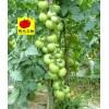 爱心番茄种子 赈灾级别西红柿种子 现代立新澳宝石头番茄种子