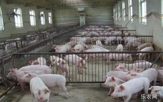 这么珍贵的猪价走势规律告诉你,屠宰场的价格如何?