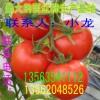 山东西红柿批发、西红柿生产基地、西红柿批发大市场