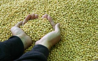 你知道黄豆的工业用途吗