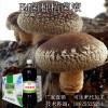EM益生菌种植双孢菇的好处可生产代加工