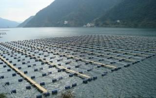 秋季养鱼重防病
