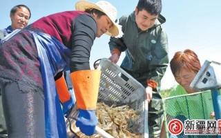 新疆米东鲜蟹活虾节前上市