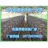 【宏基畜牧】养猪设备厂家长期供应猪用定位栏 单体保胎床