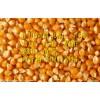 旺川现金求购:玉米、大豆、高粮、棉(豆、菜)粕